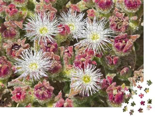 """Puzzle 1000 Teile """"Kristalline Eispflanze an einem Sandstrand in Marokko"""""""