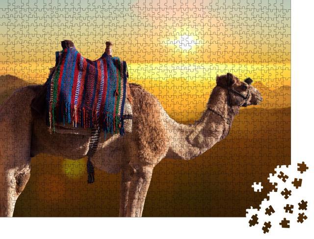 """Puzzle 1000 Teile """"Dromedar-Kamel vor dem Berges des heiligen Moses, Ägypten, Sinai"""""""