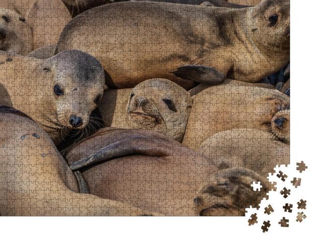 """Puzzle 1000 Teile """"Eine dichtgedrängte Herde schlafender Robben"""""""
