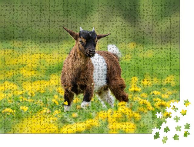 """Puzzle 1000 Teile """"Kleine nigerianische Zwergziege auf einem Feld mit Blumen, Tiere auf dem Bauernhof"""""""