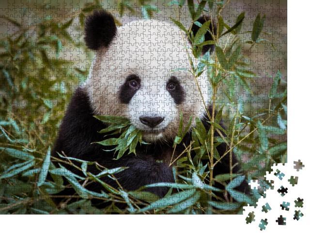 """Puzzle 1000 Teile """"Riesenpanda, den Mund voller Bambus"""""""