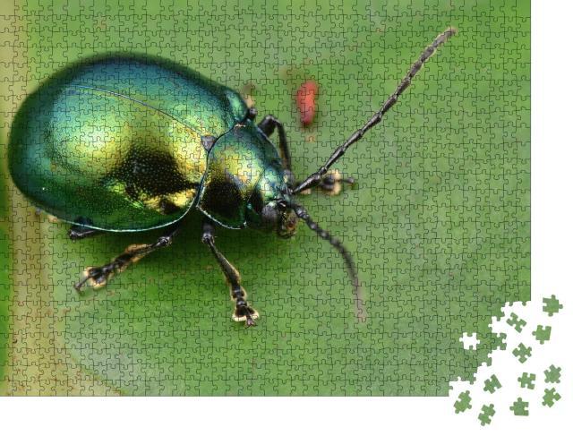 """Puzzle 1000 Teile """"Makroaufnahme eines grün glänzenden Blattkäfers"""""""