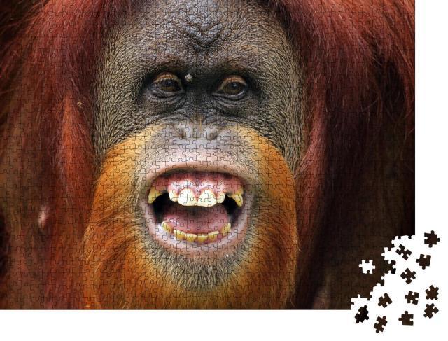 """Puzzle 1000 Teile """"Lächeln: Gesicht von Orang-Utan Sumateran"""""""