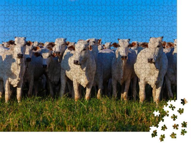 """Puzzle 1000 Teile """"Herde von Nellore-Rindern auf der Weide"""""""
