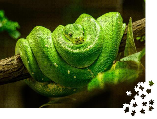 """Puzzle 1000 Teile """"Grüne Schlange auf dem Ast"""""""