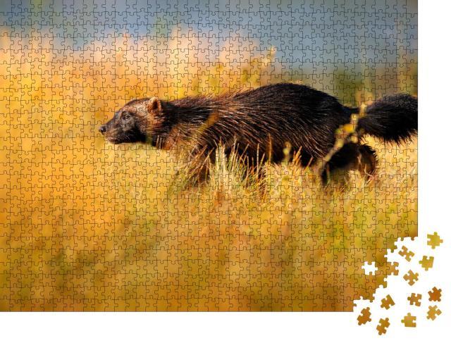 """Puzzle 1000 Teile """"Wildszene: Vielfraß in der finnischen Taiga, Nordeuropa"""""""