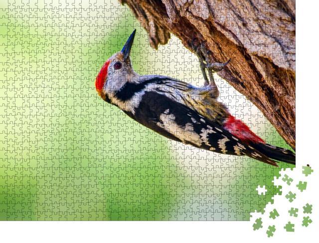"""Puzzle 1000 Teile """"Ein Specht am Baum"""""""