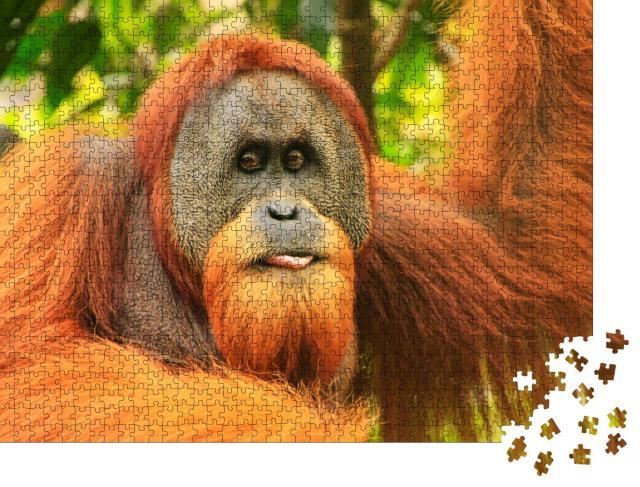 """Puzzle 1000 Teile """"Porträt eines männlichen Sumatra-Orang-Utans """""""