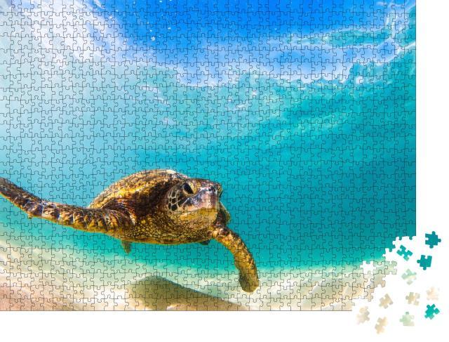 """Puzzle 1000 Teile """"Grüne Meeresschildkröte von Hawaii beim Kreuzen"""""""