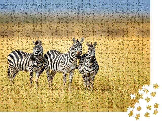 """Puzzle 1000 Teile """"Drei Zebras im kenianischen National Park"""""""